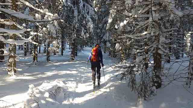 backcountry skiing through forest and snow