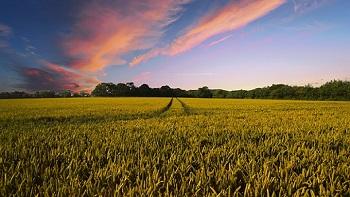 farming fields