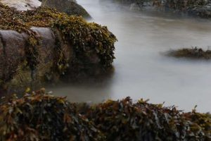 seaweed on rocks foggy coast